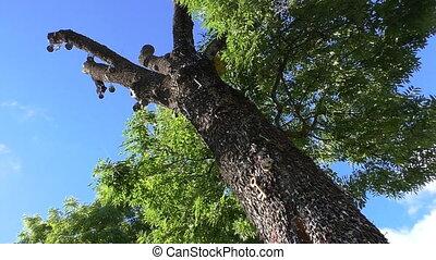 clã©, arbre, et, ciel