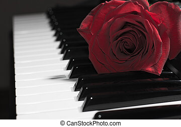 clés, rose, piano, composition, rouges