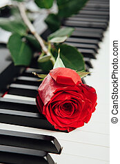 clés, rose, piano, rouges
