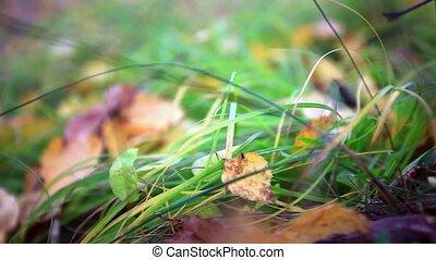 clair, feuilles, peu profond, grass., champ, profondeur, vert, baissé
