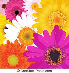 clair, fleurs