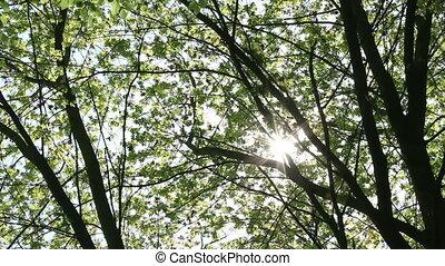 clair, forêt
