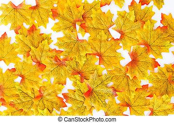 clair, jaune, érable, leaves.