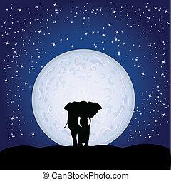 clair lune, éléphant
