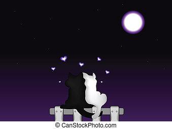 clair lune, couple, chats, amour, sous