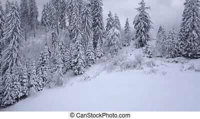 clair, neigeux, vol, sur, speeds., vidéo, temps, forest., ...