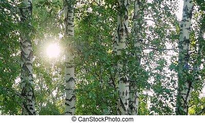 clair, sunlights, flamme, slowmotion., lentille, forêt, après-midi, 1920x1080