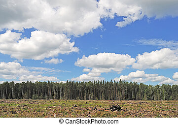 clairière, forêt, ciel, nuageux
