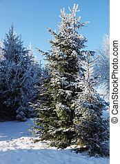 clairière, hiver, forêt, neige