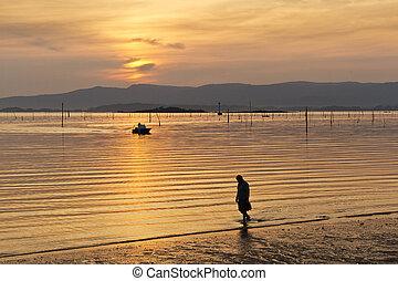 Clam aquaculture parks at golden sunset in Carril beach, Vilagarcia de Arousa