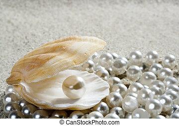 clam, macro, parel, zand, schaal, wit strand