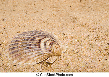 Clam Shell - A clam shell in the sand at the beach.