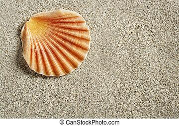 clam shell macro on clear white caribbean sand closeup