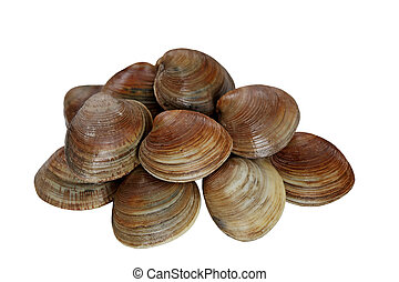 Heap of raw clams isolated on white