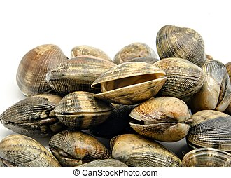 Several clams next to each other surrounded by white background