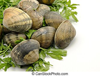 Several clams next to each other with parsley leaves surrounded by white background