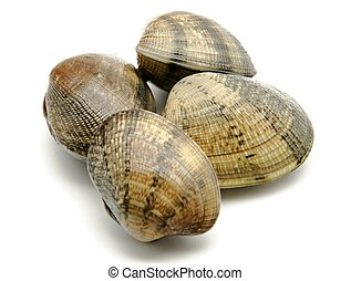 Clams - Several clams next to each other surrounded by white...