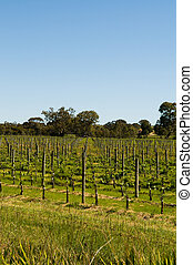 Royalty free stock photo of vineyards in clarendon, south australia