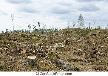 clarifiez réduction, forêt, secteur
