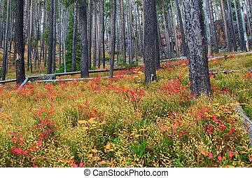 clark, lewis, nacional, -, montana, bosque