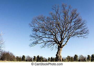 claro, árbol ceniza, día