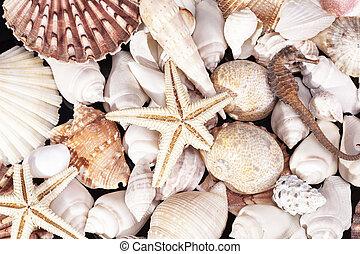 clase, mar, estrellas de mar, conchas, seahorse, vario,...