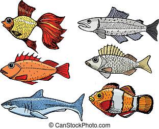 clases, de, el, peces
