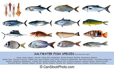 clasification, aislado, especie, agua salada, peces blancos