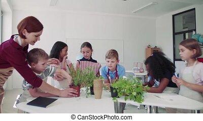 classe, planter, prof, groupe, école, herbs., debout,...