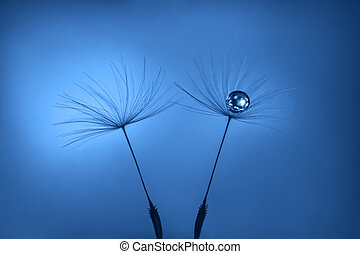 Classic Blue background. Color of the year 2020. Dandelion seeds with water drop