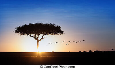 Classic Blue Sky Sunset Behind Tree Silhouette