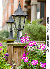 Classic garden lamp with blooming Petunia - Classic old ...