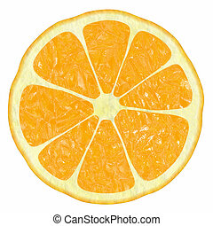 classical citrus - The image of illustrations of different...