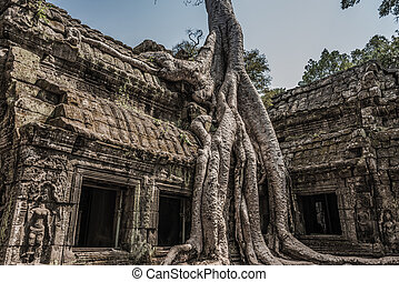 Classical picture of Ta Prohm Temple, tree roots growing