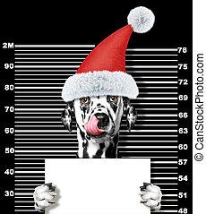 claus, chien, isolé, noir, santa, prison., dalmatien