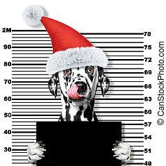 claus, chien, isolé, santa, prison., dalmatien, blanc