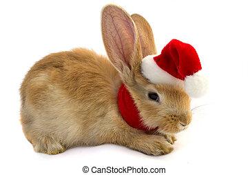 claus, kapelusz, święty, królik