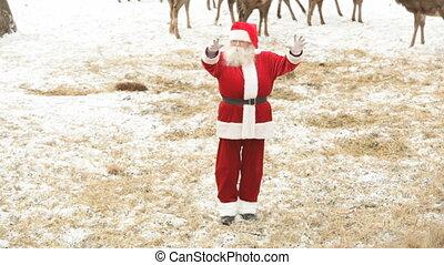 Claus,  santa, kühl