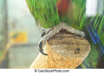 Claw green parrot
