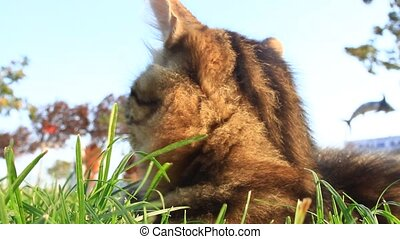 Clawing into the world - Lovely tabby cat lying on grass and...