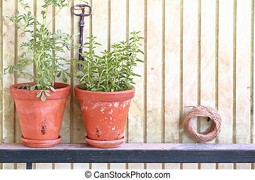 Clay pots with fresh herbs in front of an old wall