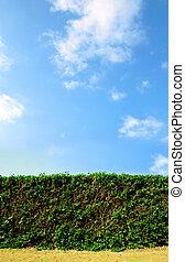 Clean cut hedge against a bright blue sky