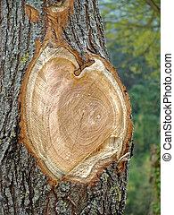 clean cut slice of large tree closeup - The clean cut slice...