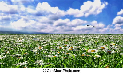 Clean Energy - camomile field on a background of mountains. ...