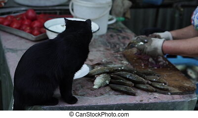 Clean fish. The cat watches how the fish are peeled from the husk.