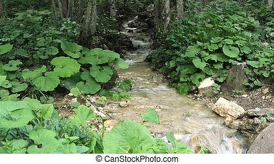 Clean fresh water of a forest stream