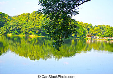 Clean lake in green spring summer