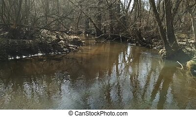Clean River in the old forest. Spring. 87
