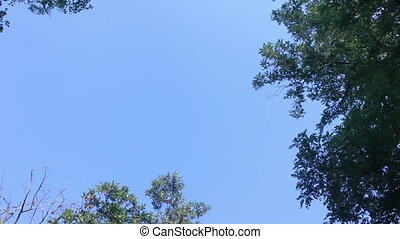 Clean sky with trees background