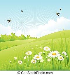 Clean spring amazing scenery. Vector nature landscape. chamomile %u0410%u0434%u0449%u0446%u0443%u043A